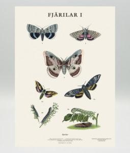 Gammaldags plasch i storlek 50x70 med motiv av fjärilar