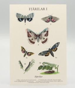 Vykort med motiv av 7 sorters fjärilar