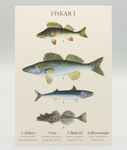 A5 vykort med motiv av fyra fiskar