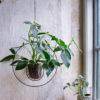 glasampel i stålring mot putsad vägg med växt i